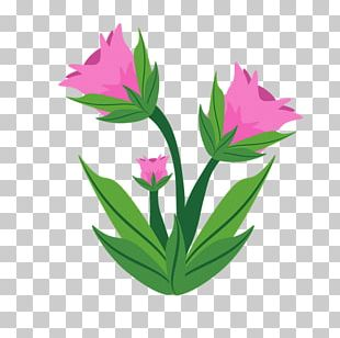 Flower Garden Name Plant PNG