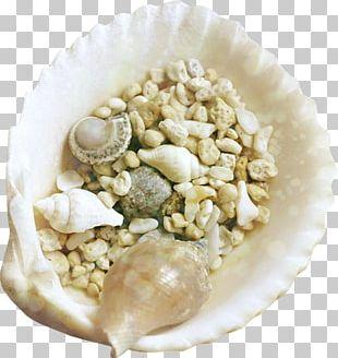 Seashell Mollusc Shell PNG