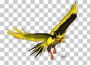 Zapdos Moltres Digital Art Drawing PNG