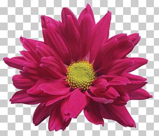 Cut Flowers Chrysanthemum ×grandiflorum PNG