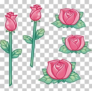 Garden Roses Cabbage Rose Cut Flowers Sticker PNG