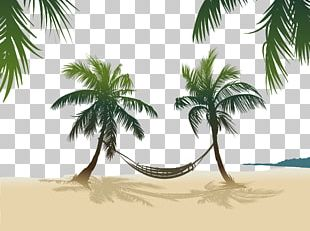 Arecaceae Stock Photography PNG