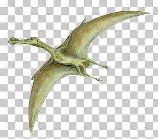 Dinosaur Size Quetzalcoatlus Flight Pterosaurs Rhamphorhynchus PNG