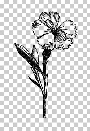 Flower Drawing Visual Arts Black And White PNG