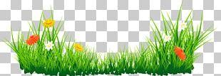 Clipart Computer Wallpaper Flower PNG