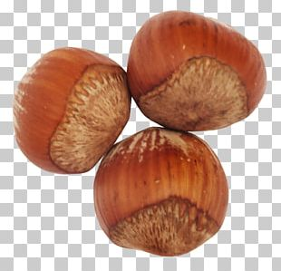 Hazelnut Vegetable Oil Common Hazel PNG