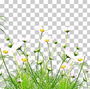 Kunshan Wildflower PNG