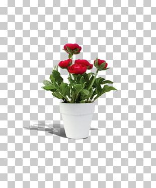 Flowerpot Rosa Chinensis PNG