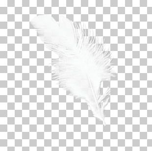 Feather White Beak Tail PNG