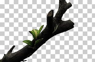 Tree Branch Wood PNG
