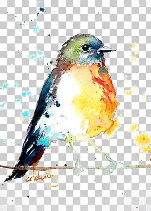 Bird European Robin Watercolor Painting Drawing PNG