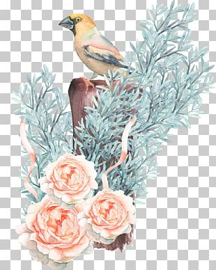Bird Watercolor Painting Drawing Flower PNG