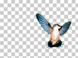 Bird Wing Feather Beak Fauna PNG