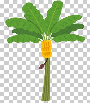 Banana Leaf Banana Leaf Fruit Tree PNG