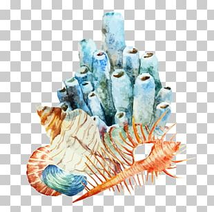 Coral Reef Watercolor Painting Illustration PNG