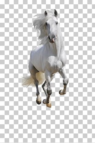 Mustang Andalusian Horse American Paint Horse Arabian Horse Equestrian PNG