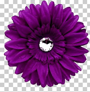 Transvaal Daisy Purple Flower Common Daisy PNG