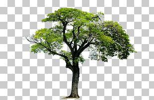 Tree Acrylonitrile Butadiene Styrene Monomer 1 PNG