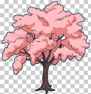 Cherry Blossom Flower Tree PNG