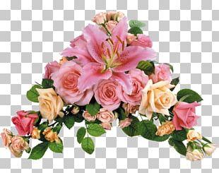 Flower Rose Lilium Desktop Transvaal Daisy PNG