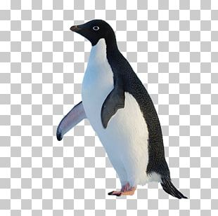 King Penguin Original Penguin PNG