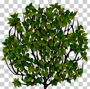 Sprite Shrub 2D Computer Graphics Tree PNG