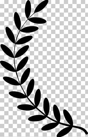 Olive Branch Laurel Wreath PNG