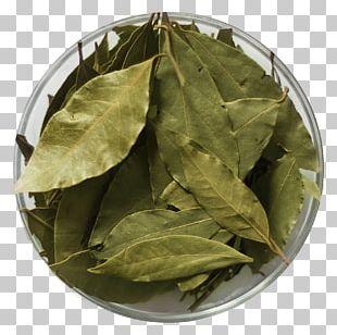 Bancha Herb PNG