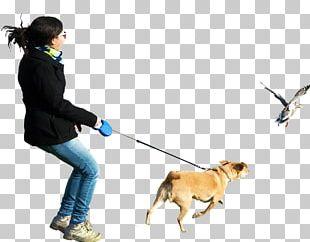 Dogo Argentino Perro De Presa Canario Dog Walking PNG