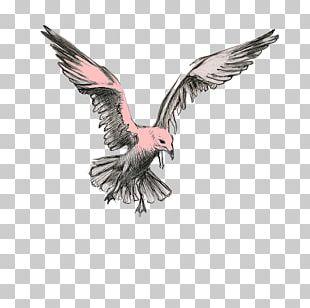 Bird Of Prey Beak Vulture Eagle PNG