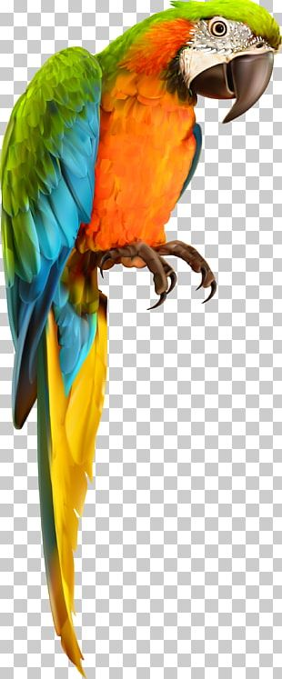 Parrot Bird Animal Material PNG