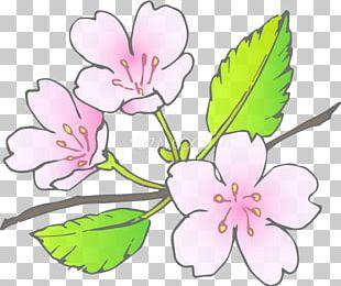 Floral Design Blossom Cut Flowers Plant Stem PNG