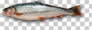 Fishing Iridescent Shark PNG