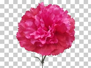 Carnation Cut Flowers Artificial Flower Plant PNG