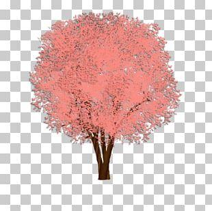 Shade Tree Cedar Elm Weeping Fig PNG
