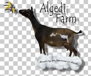 Nigerian Dwarf Goat Farm Cattle Dairy Mammal PNG
