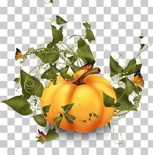 Pumpkin Squash Vegetable PNG