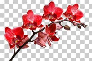 Orchids Desktop Stock Photography Depositphotos PNG