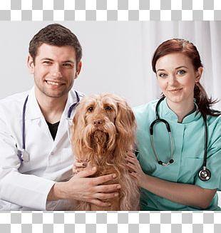 Veterinarian Cat Bichon Frise Paraveterinary Worker Maltese Dog PNG