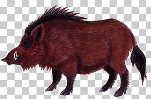 Wild Boar Game Euclidean PNG