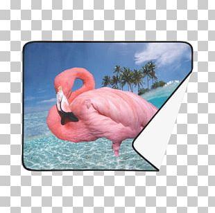 Vehicle License Plates Motor Vehicle Registration Bird Florida PNG