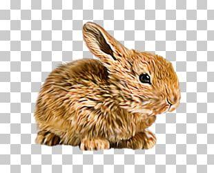Domestic Rabbit Hare Flemish Giant Rabbit Mini Lop Mother Rabbit PNG