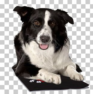 Border Collie Rough Collie Old English Sheepdog Puppy PNG