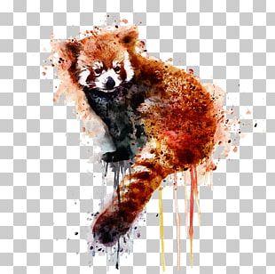 Red Panda Giant Panda Watercolor Painting Art PNG
