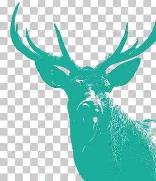 Reindeer Illustration Antler Silhouette PNG