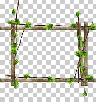 Frames Tree Window Wood Branch PNG
