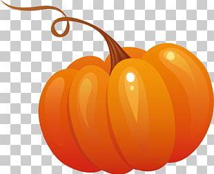 Pumpkin Pie Calabaza PNG