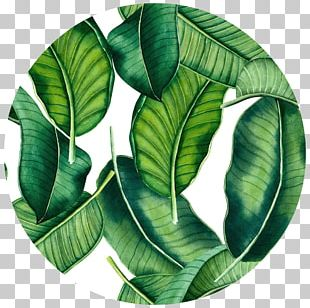 Banana Leaf Tropics Wall Decal PNG
