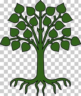Root Tree Cartoon PNG