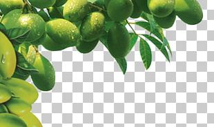 Olive Oil Tree PNG